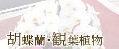 胡蝶蘭・観葉植物
